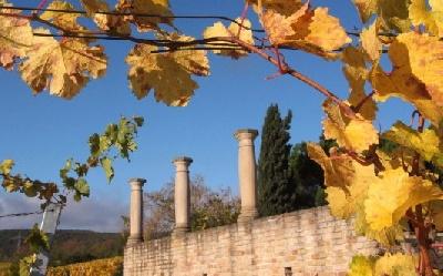 Terroirwanderung zu den Römern Pfalz