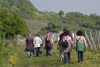 Weinwanderung Pfalz