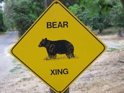 Abenteuerurlaub mit Bärenbeobachtung