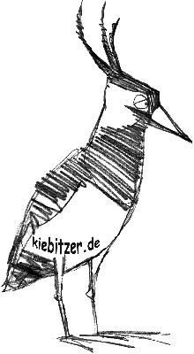 kiebitzer