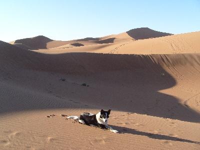 Auch Hunde sind bei unseren Geländewagenreisen erlaubt. Hier unser Wüstenhund Skye.